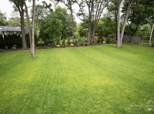 graded backyard in spring 3 800x533