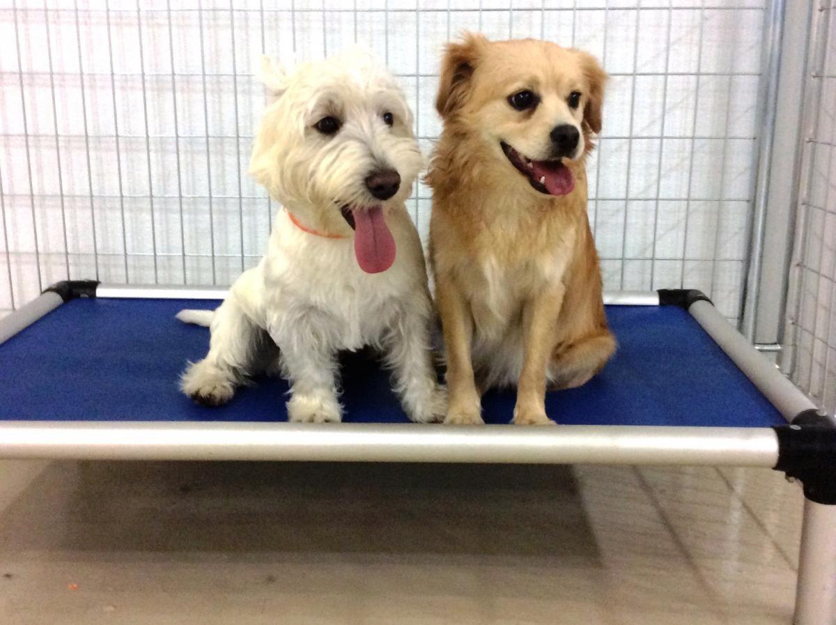 professional dog kennels dog boarding