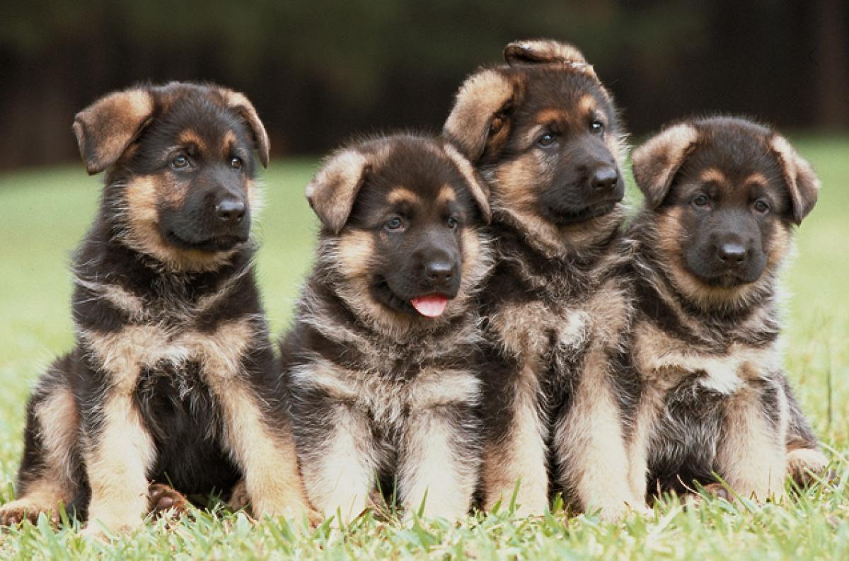 professional dog kennels dog breeding