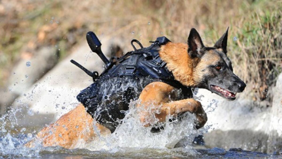 professional dog kennels military dog