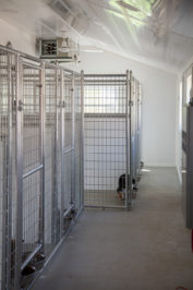 20x60 dog kennel for multiple dogs