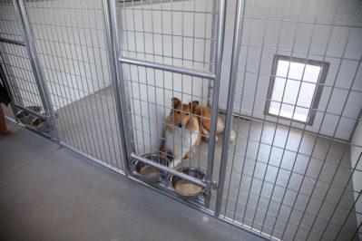 20x60 dog kennel