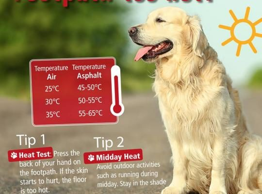 provide shade to keep your dog cool