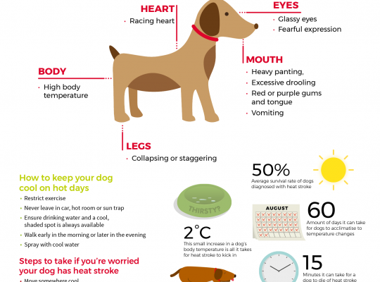 keep your dog cool and watch for signs of heat stroke