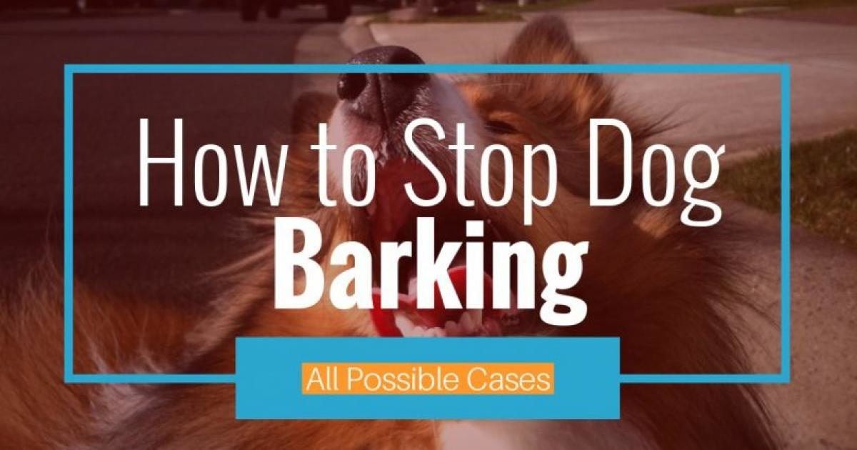 how to get your dog to stop dog barking